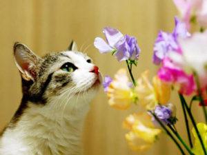 токсични цветя за котките